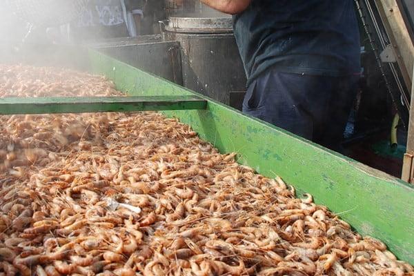 Visserijbedrijf Cornelis Vrolijk neemt een belang in Garnalenpelcentrum Kant